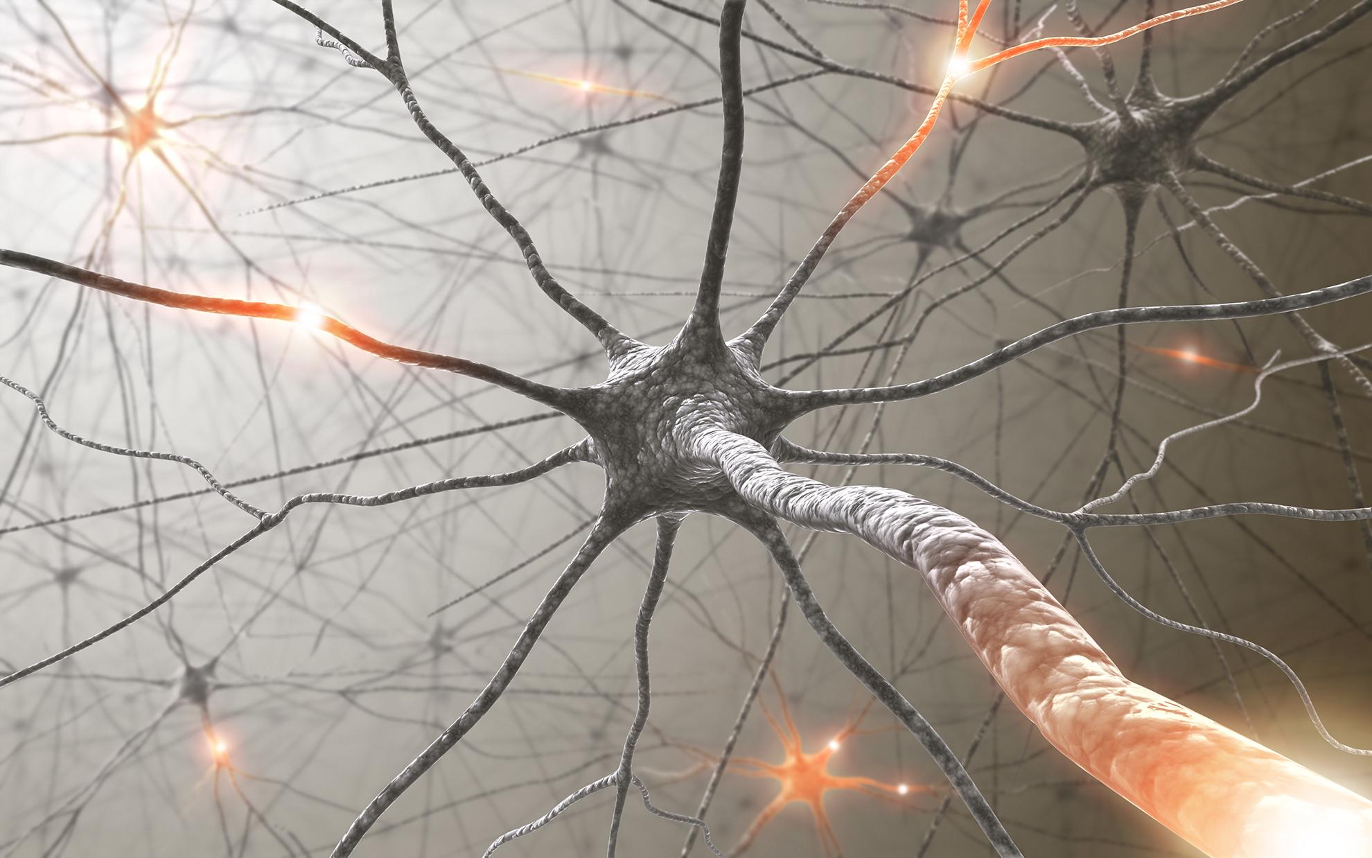 BDNF: Das Wunderprotein für mehr Hirnleistung